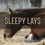 Sleepy Lays