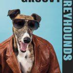 Groovy Greyhounds